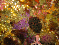 A treasure chest of wonders life on the Agulhas reefs.png
